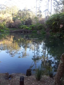 Pond at the botanical gardens