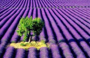 Lavender looking towards the future, with clarity and focus
