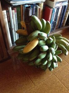 My own bananas, just ripening now