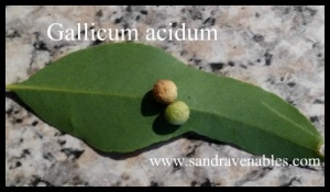 Gallicum acidum homeopathy